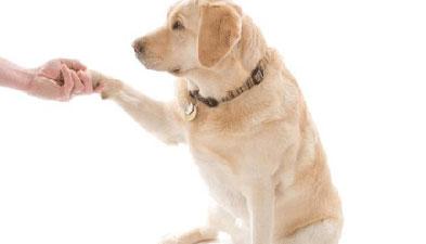 Alzheimer, una malattia ancora senza cura. Ad Happy Valley la pet therapy offre un valido supporto.