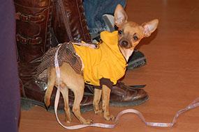 Corso Pet Therapy 2012